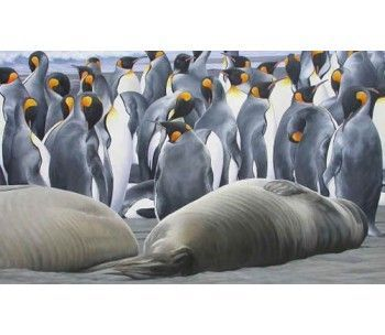 King Penguins and Elephant Seal pups, South Georgia - size A3